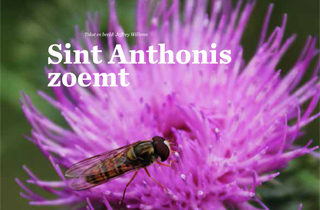 In de media - Sint Anthonis zoemt