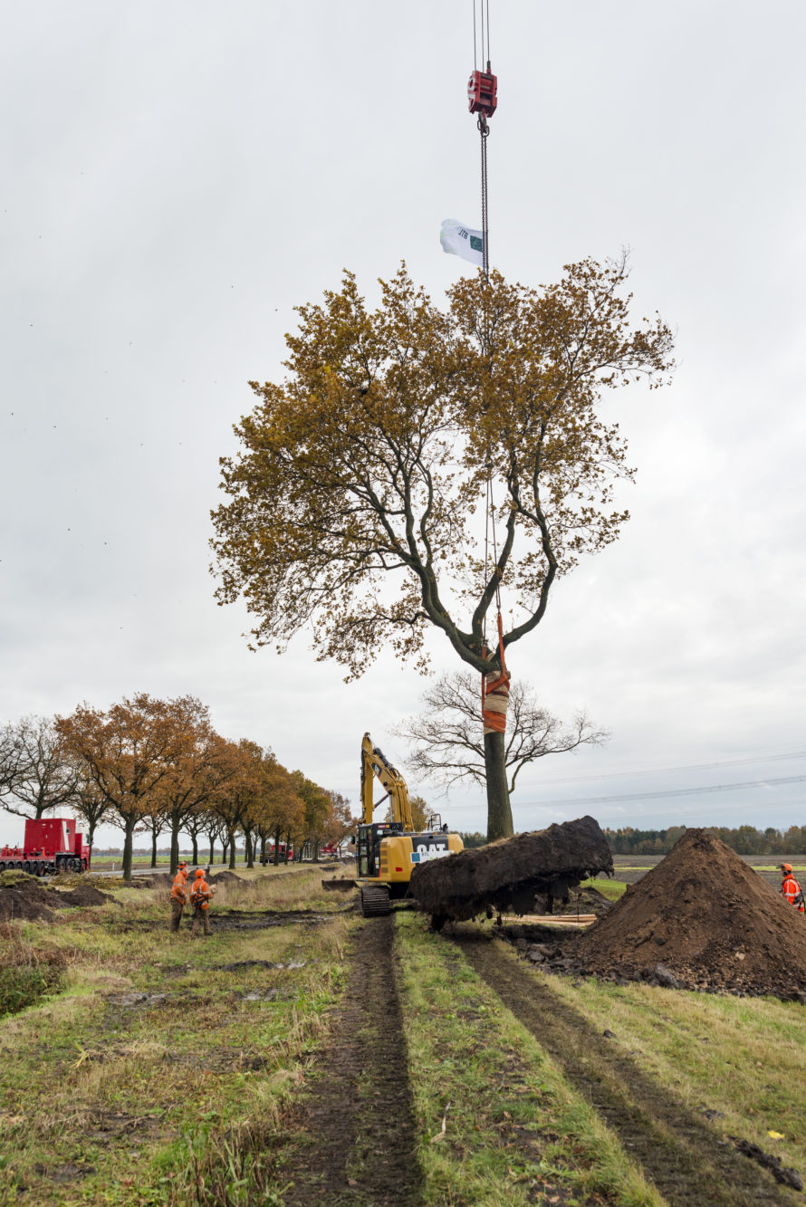 project - verplanten bomen n366 -1